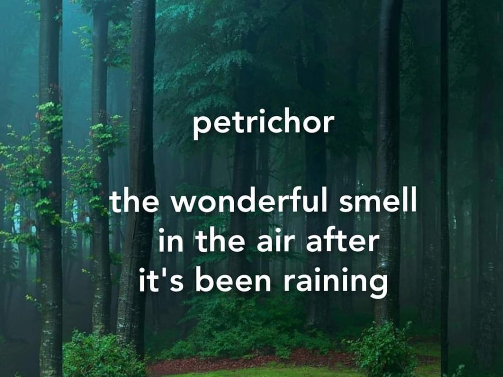petrichor-the wonderful smell in the air after it's been raining