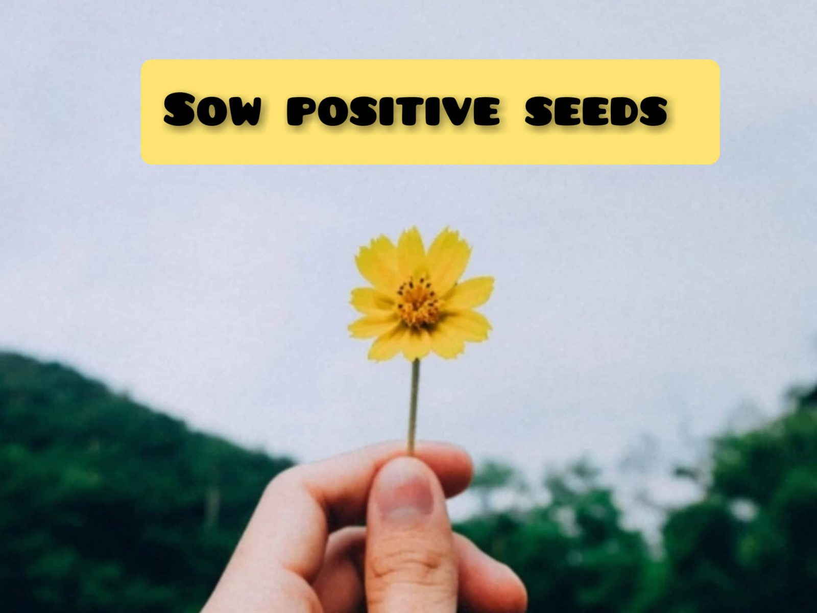 Sow positive seeds to harvest positivity in the future.
